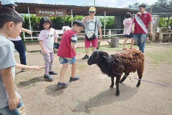 Broga Petting Zoo 5