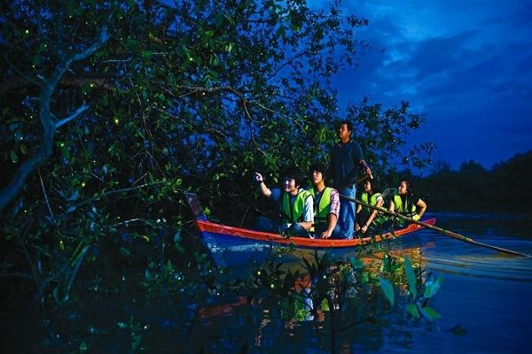 Kuala-Selangor-Fireflies-2