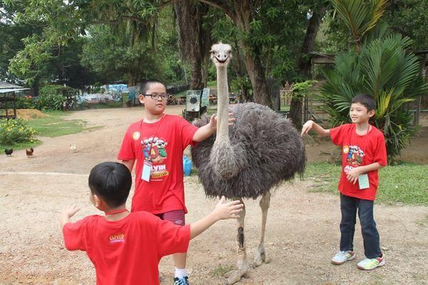 Ostrich-8