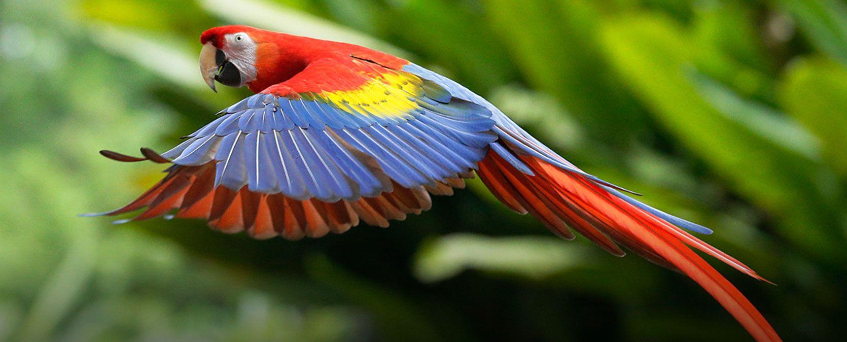 SG-BirdPark