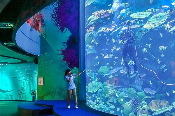 Sea-life-Aquarium-1
