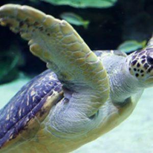 aquaria-klcc-tickets