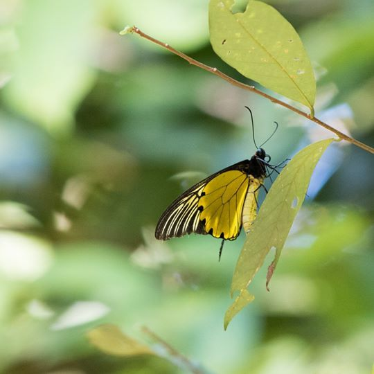 butterfly-walk
