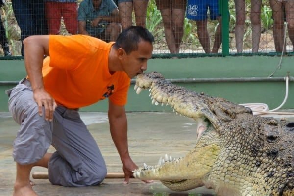 crocodile_adventureland