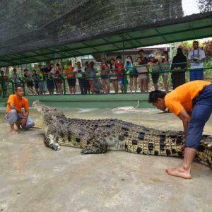 crocodile_adventureland