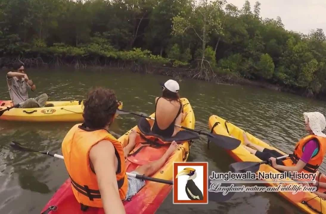 junglewalla-kayak