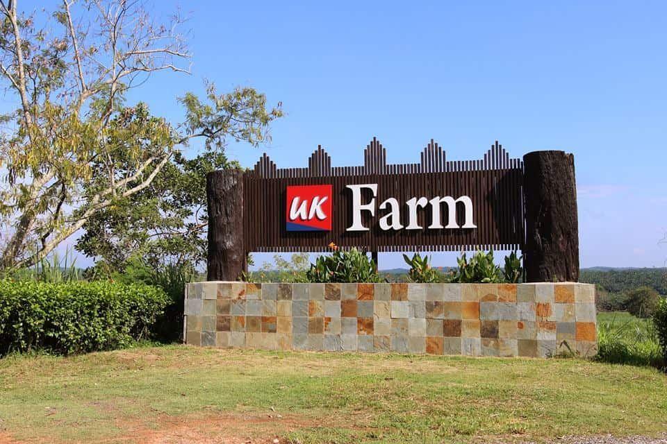 uk-farm-6