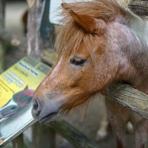 zoo-negara-ticket