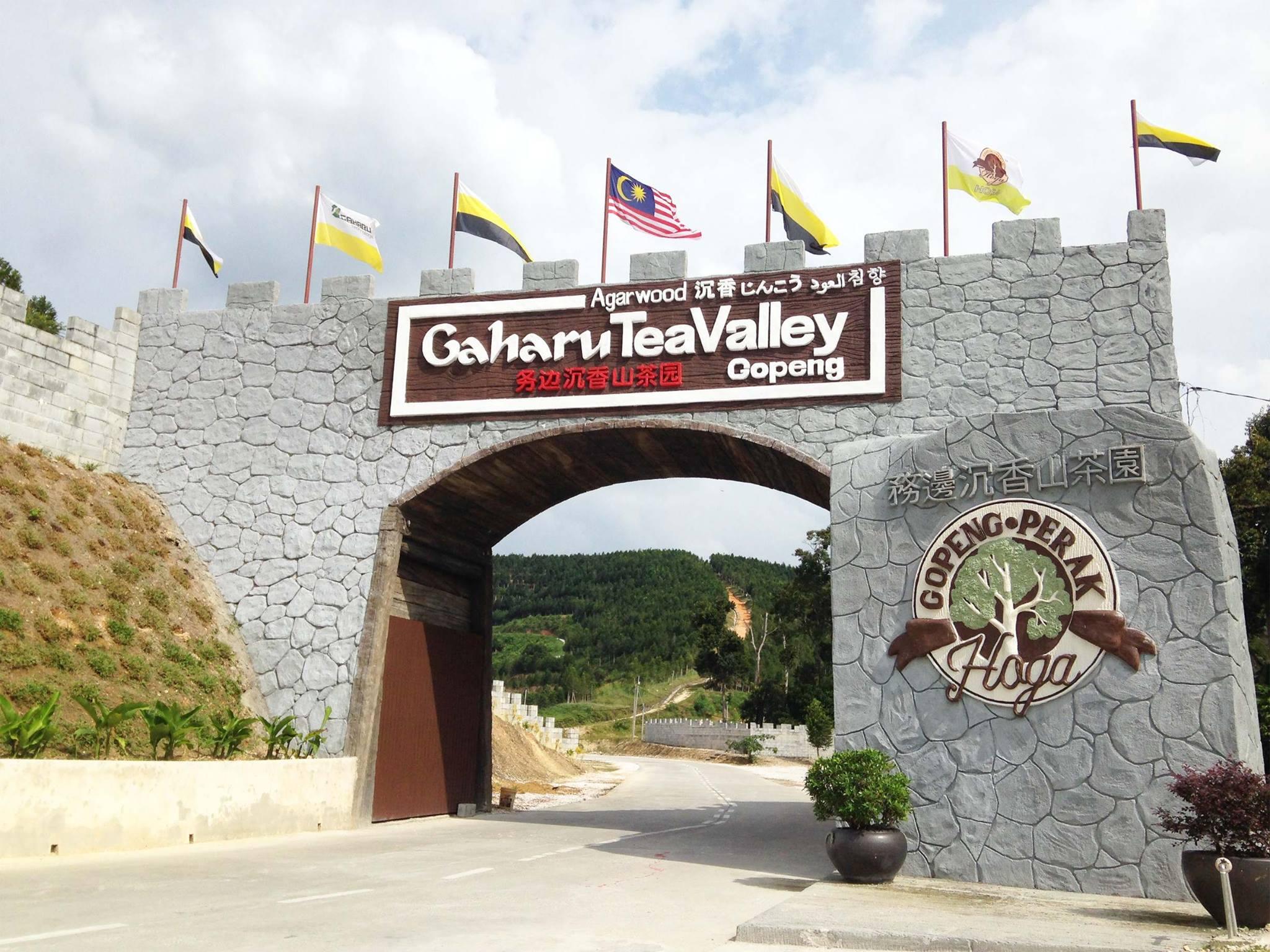 Gaharu-tea-valley-gopeng