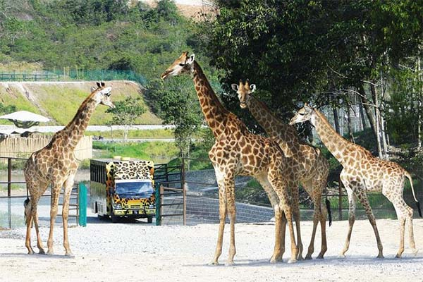 Gambang-Safari-Park-3