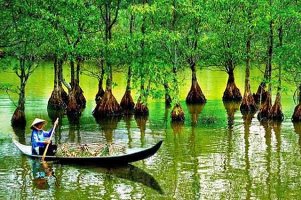 Mangrove-Forest-Monkey-Island-5