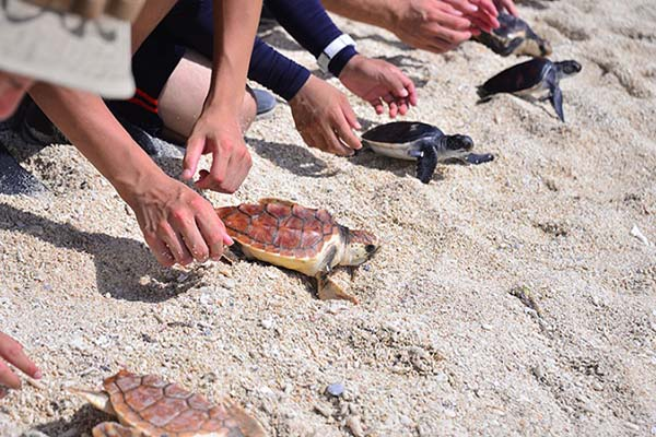 Baby-Turtles-Release_1