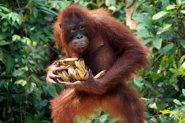 Broneo-Primates_3