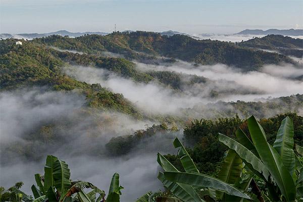 Kinabalu-Park-Botanique_3