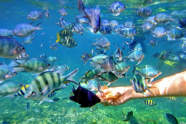 Pulau-Kapas-Snorkeling-Day-Trip_6